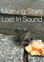 Morning Stars x Lost In Sound: Atree